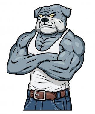Strong muscle aggressive bulldog