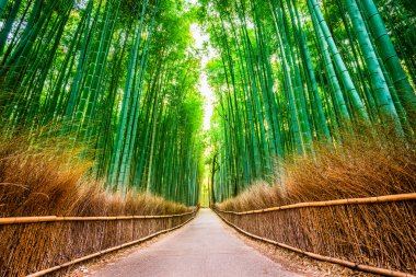 'Kyoto Bamboo Forest