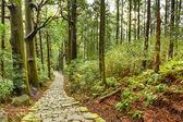 Posvátné Kumano Kodo japonská stezka
