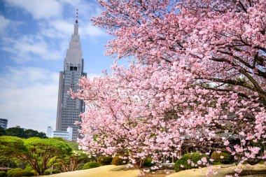Shinjuku Gyoen Park in the Springtime