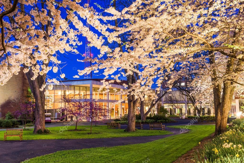 University Campus in Spring