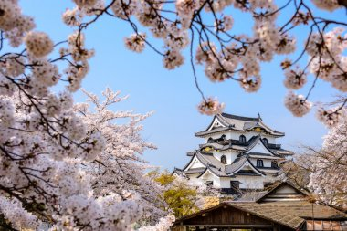 Hikone Castle Japan