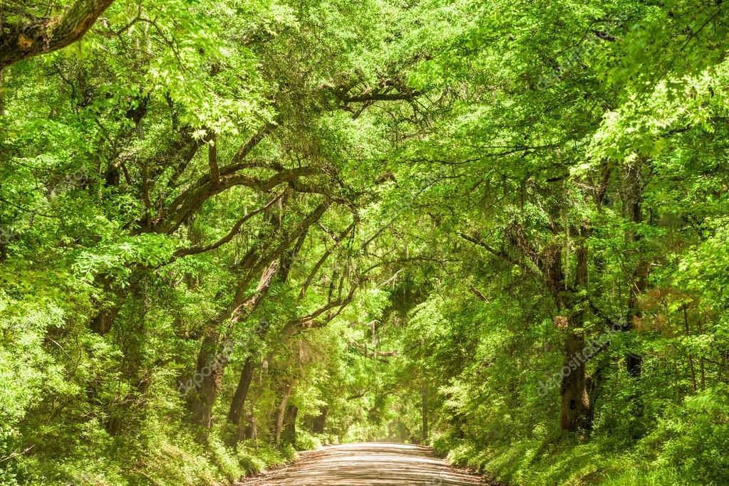 Edisto Island South Carolina