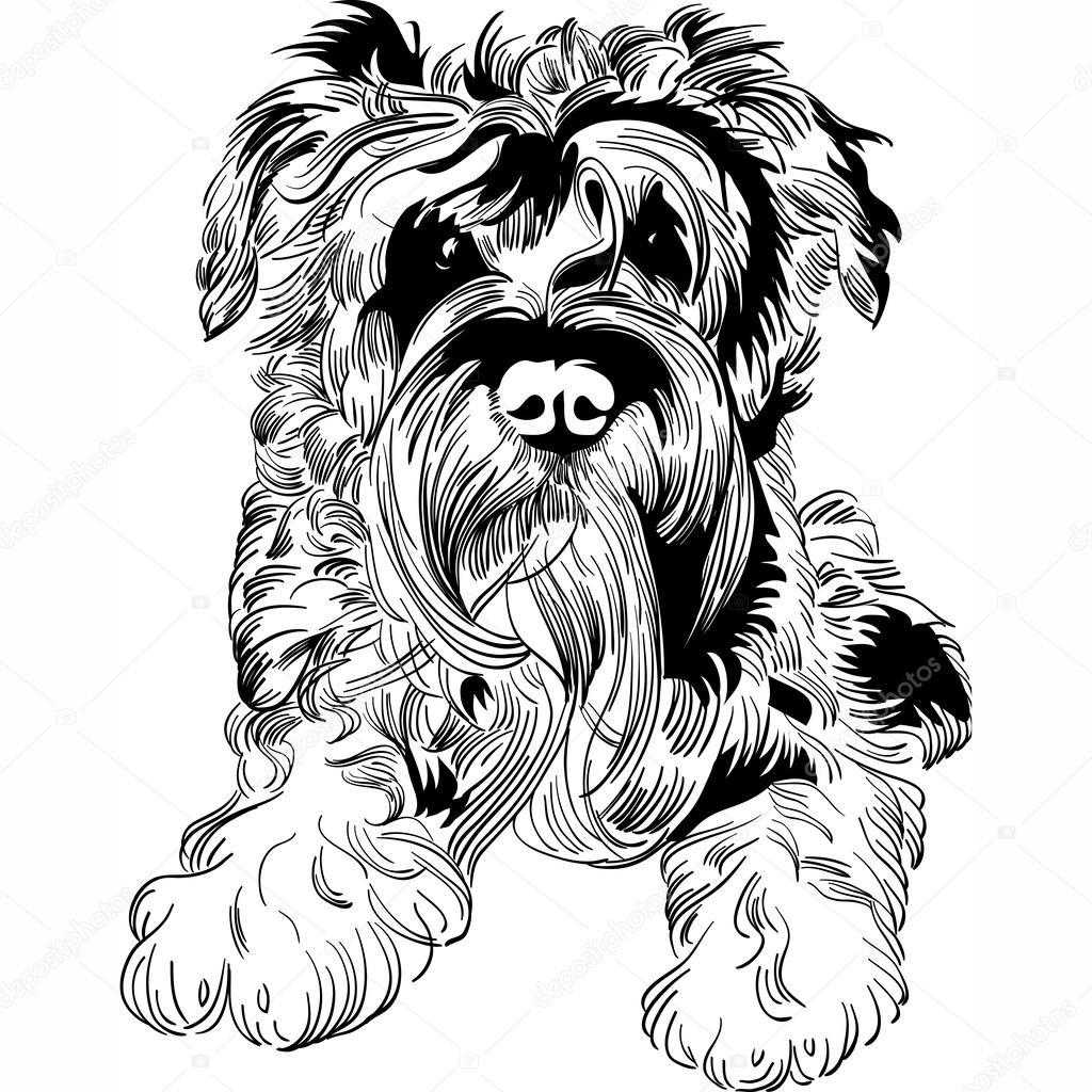 Sznaucer Miniaturowy Swinka Miniaturka Wektory Stockowe Yorkshire Terrier Miniaturka Obrazy I Ilustracje Depositphotos