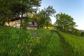 paesaggio idilliaco con erba verde
