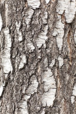 Bark texture close up stock vector