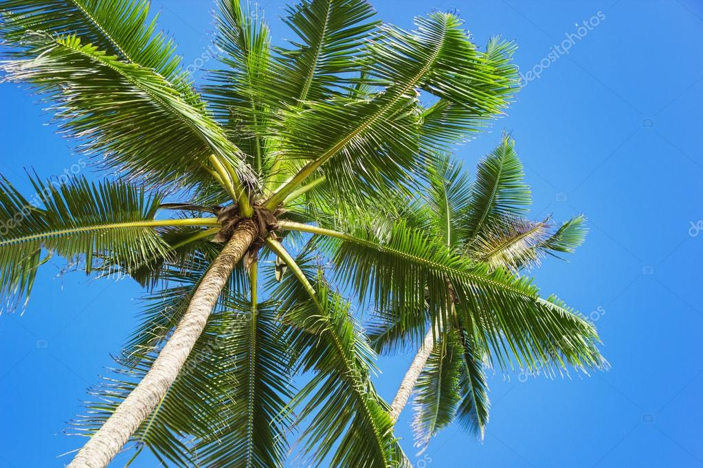 Tropical beach with palm trees. Beautifull sea nature background