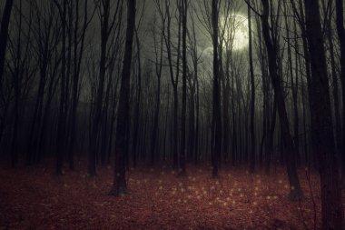 Moon light in darkness autumn forest.