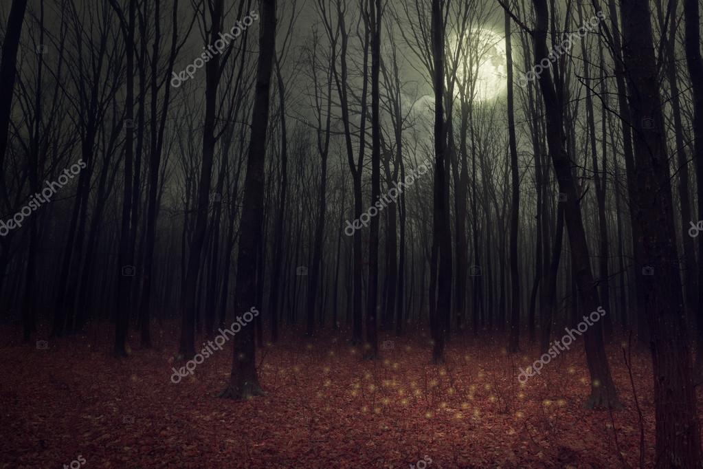 Moon light in darkness autumn forest.
