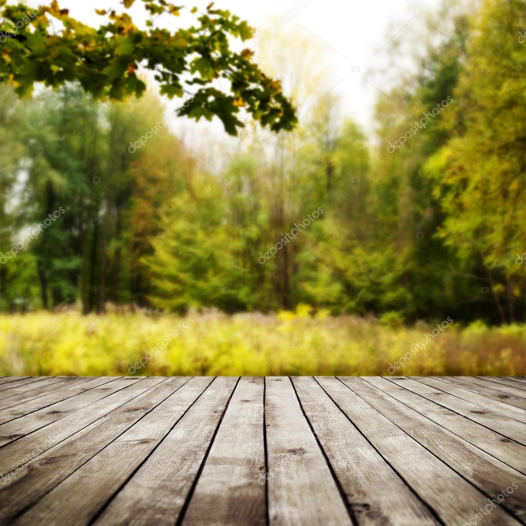 Beautiful sunlight in autumn forest