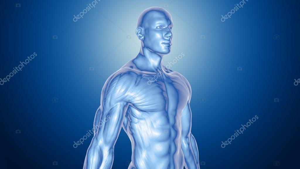 Anatomie des Menschen männlich — Stockfoto © julos #93343460