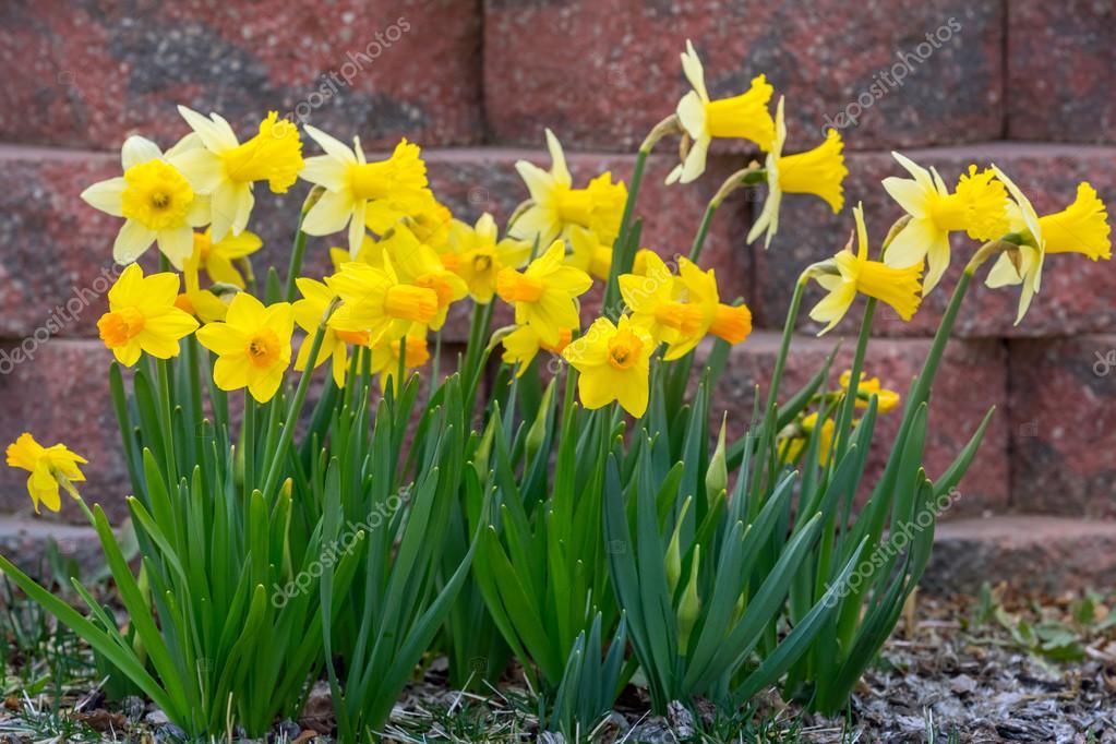 Erste Fruhlingsblumen Stockfoto C Mblach 104456806