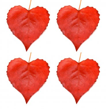 Collection of leaves heart isolated on white background stock vector