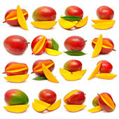 Fotografie Collection of mango fruits