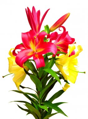 Bouquet of beautiful flowers lily
