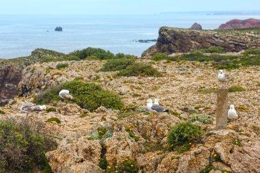 Seagulls on Cape St. Vincent, Algarve, southern Portugal.