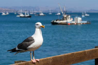 sea gull at the dock