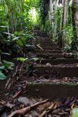 schodiště v deštném pralese