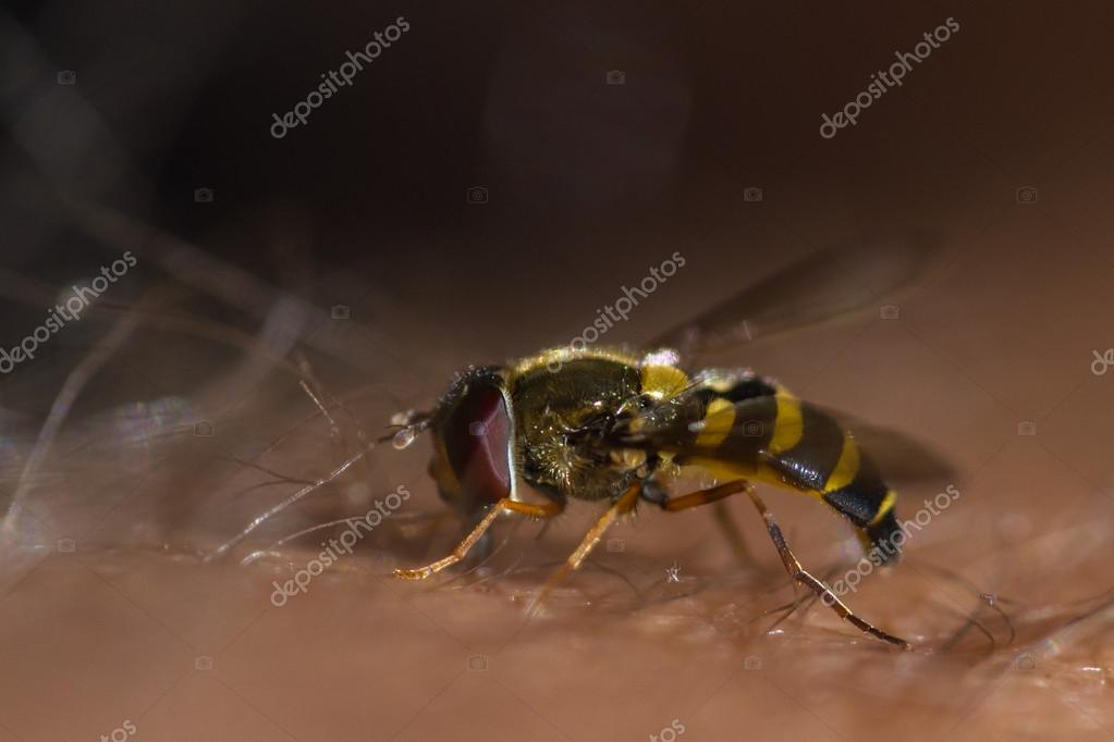 Hoverfly on my leg