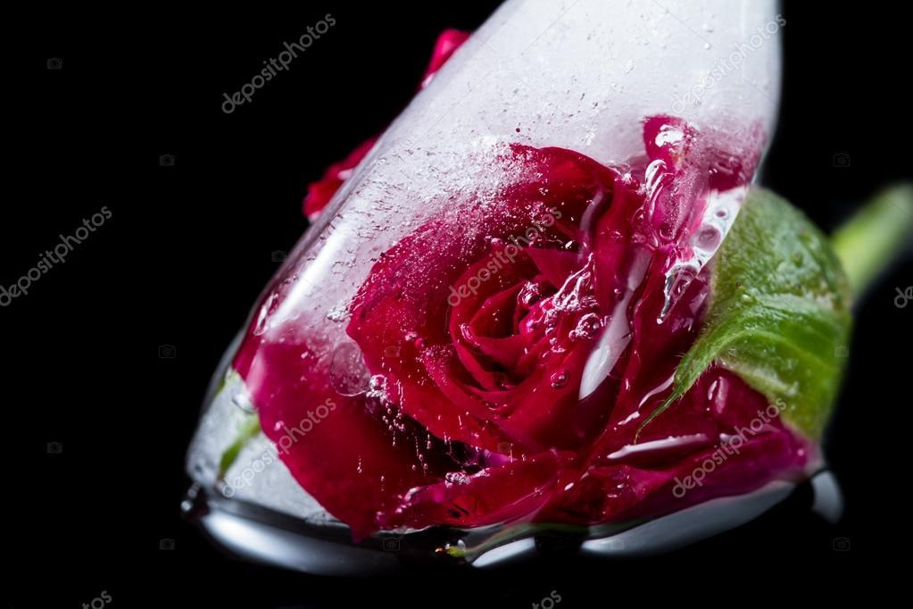 Mała Czerwona Róża Zamrożone W Bryle Lodu Zdjęcie Stockowe