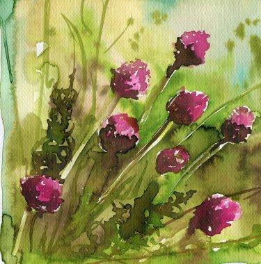 Clover, meadow flowers,