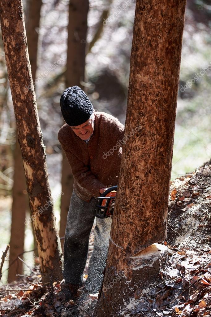 Old man cutting trees using a chainsaw in the forest