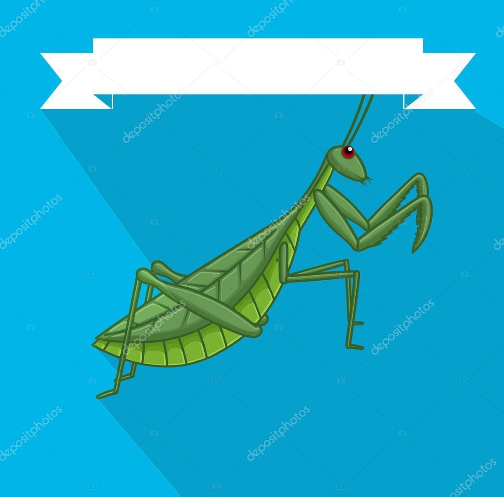 фото богомолов насекомых