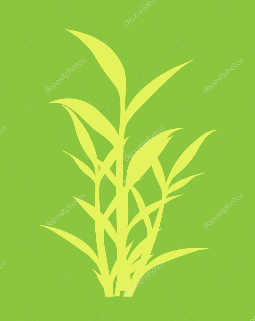 Shape of Bamboo Plant Leaves