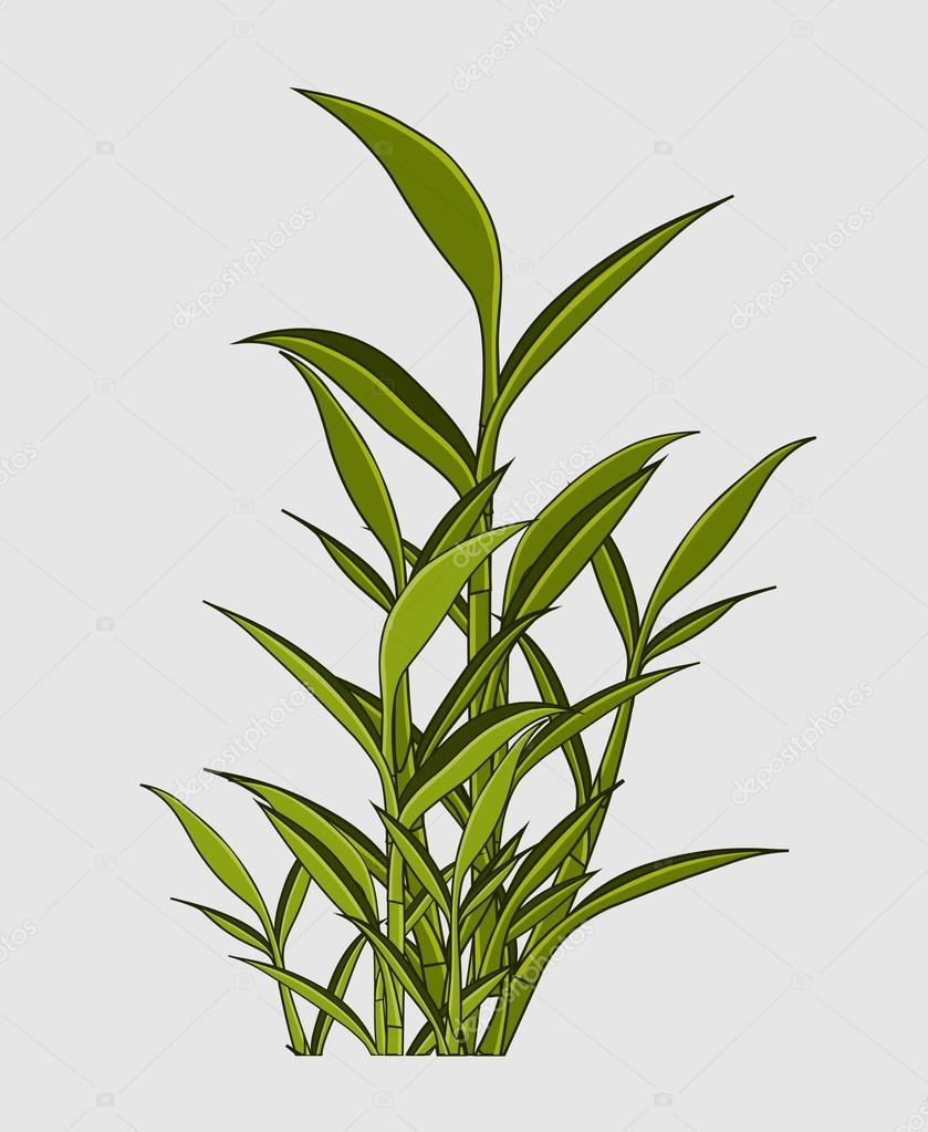 Growing Green Leaves Plant
