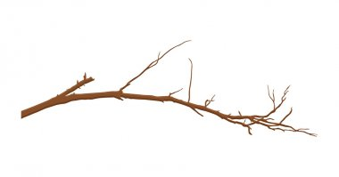 Dry Tree Branch Vector