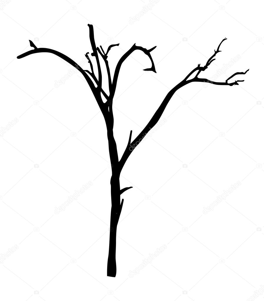 Dead Tree Branches Shape