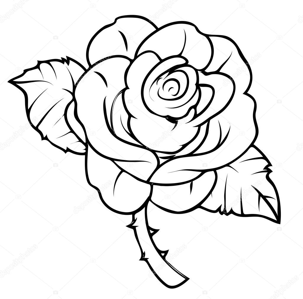 Rose Drawing