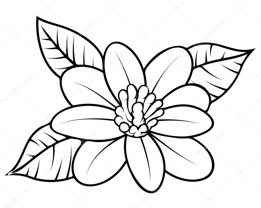 Wild Flower Sketching