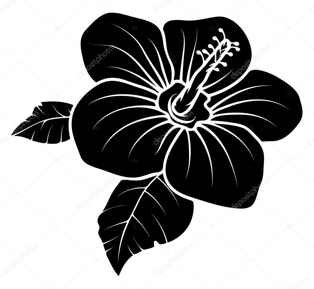 Lily Flower Vector Silhouette