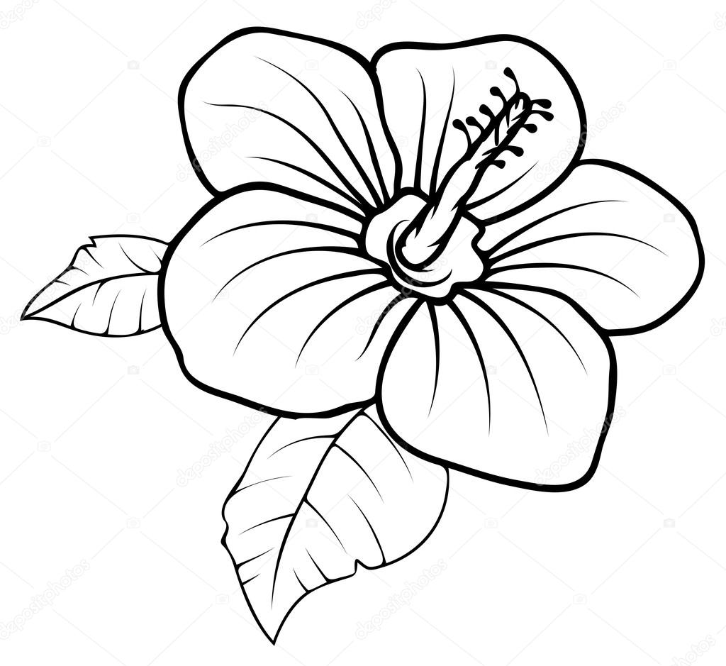 Drawing of Retro Flower