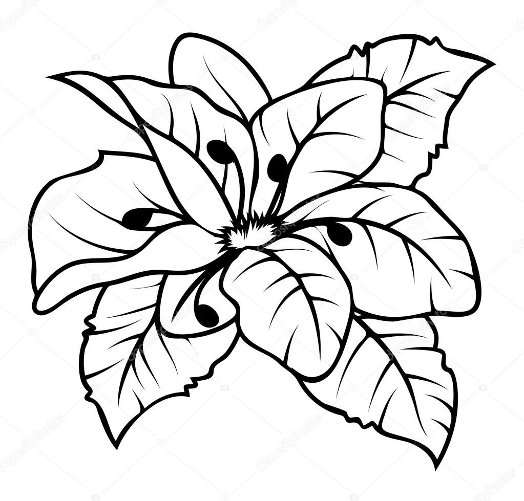 Wild Flower Drawing Vector