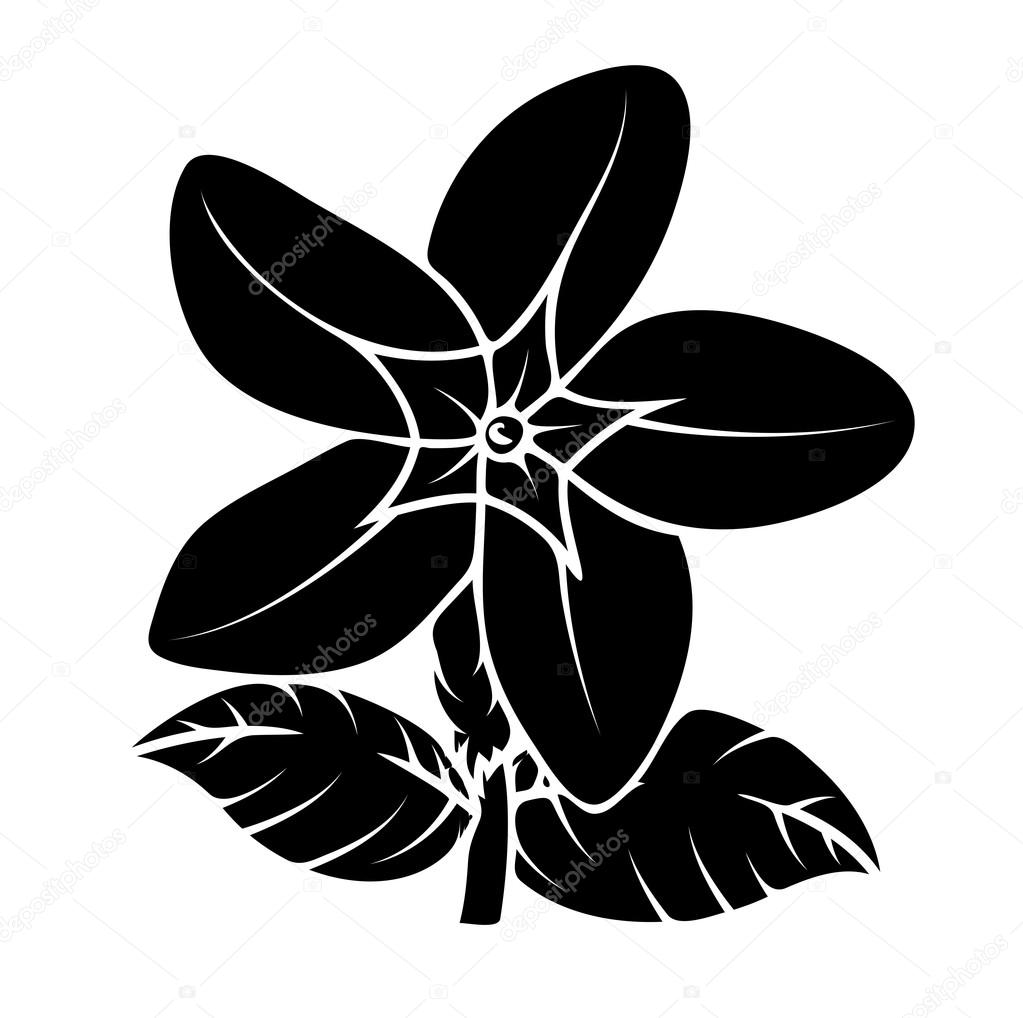 Wild Flower Silhouette Vector