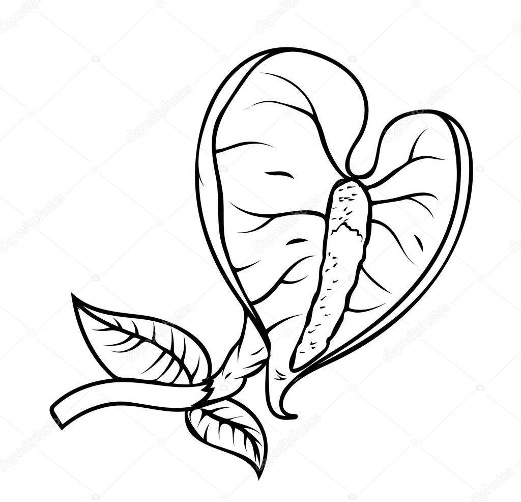 Retro Leaf Flower Branch Drawing