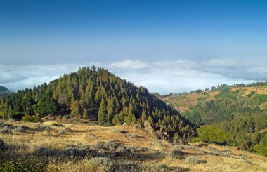 Inland Gran Canaria, view over the tree tops towards cloud cover