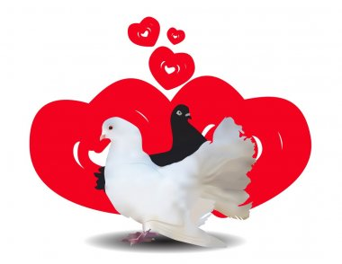 Love and pigeons