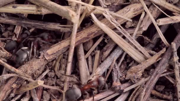 mraveniště budova detail