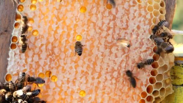 včely na honeycomb s medem