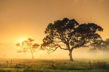 Golden Aussie Sunrise