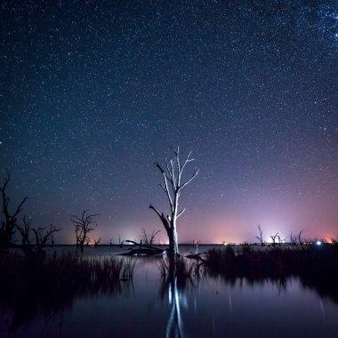 Night sky over a dead tree