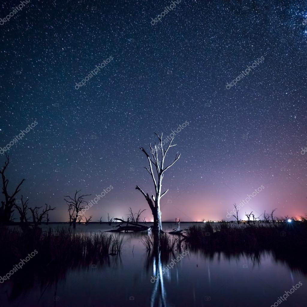 Night sky over a dead tree