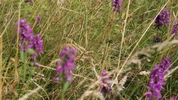 blooming purple flowers in a meadow