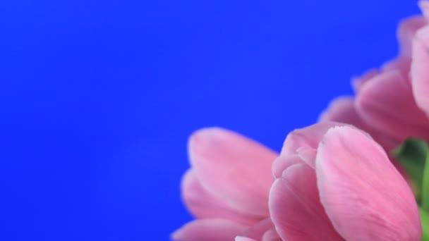 květ květiny