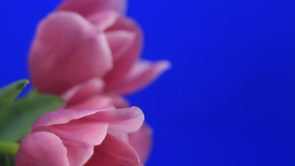 virág virágok