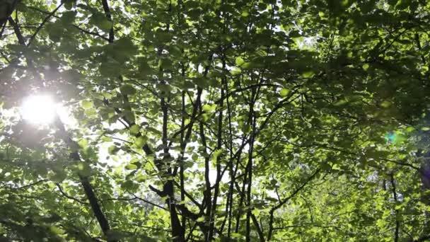 sluneční paprsky nad zelenými listy