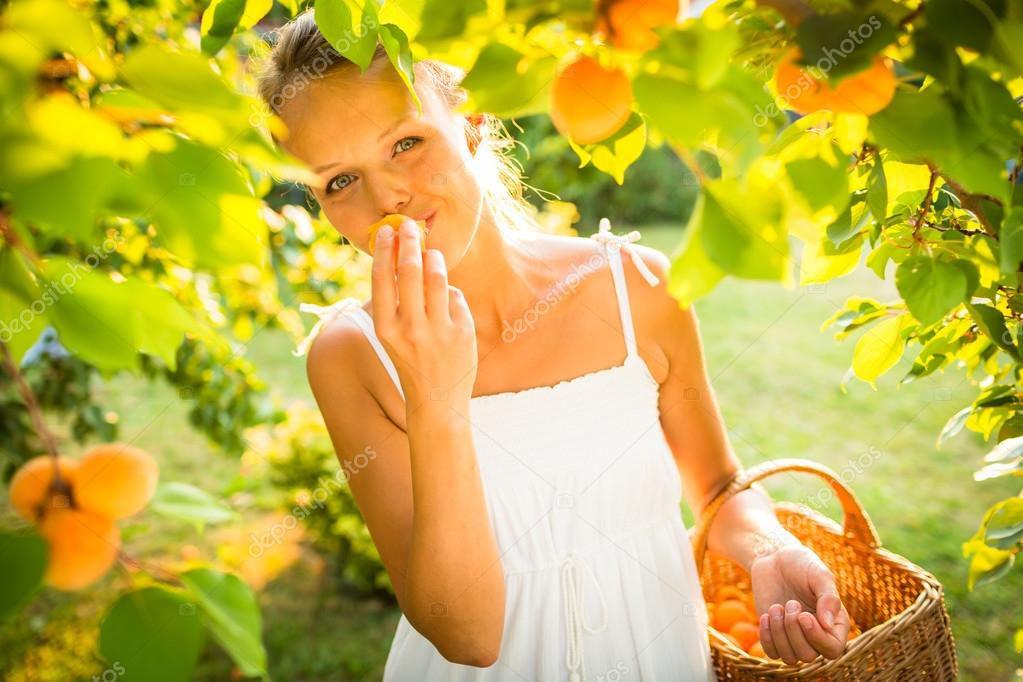 Pretty, young woman picking apricots lit by warm summer evening